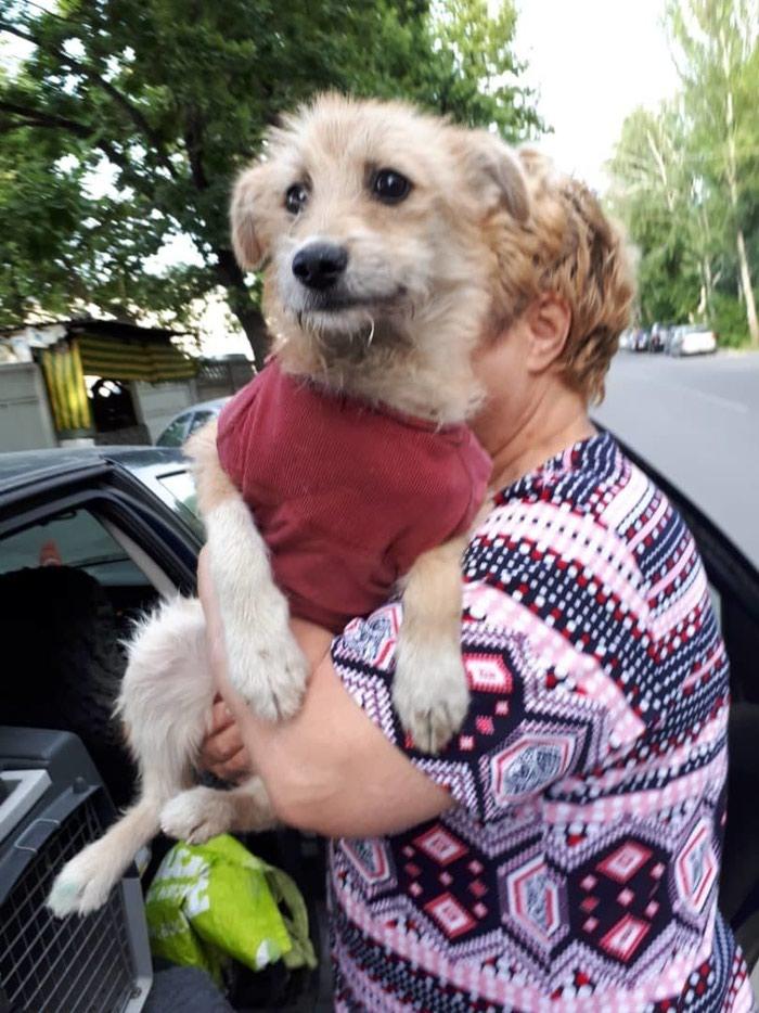 Отдаю в добрые руки собачку девочку 8 в Бишкек