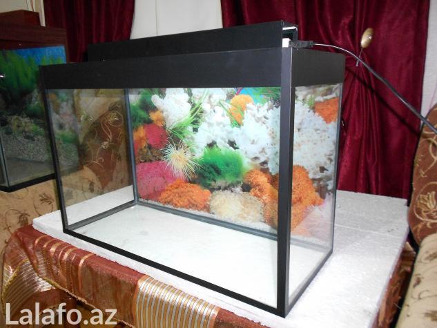 Teze akvarium 60 litre . Photo 3