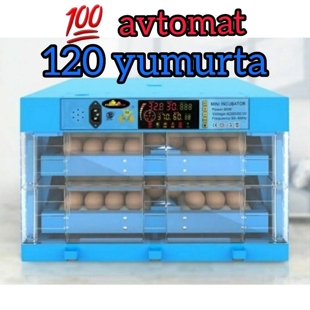 İnkubator.Inqubator.Ən müasir 💯 tam avtomat inkubatorlar.Avtomatik | Elan yaradılıb 17 Mart 2021 20:44:22 | HEYVANLAR ÜÇÜN MALLAR: İnkubator.Inqubator.Ən müasir 💯 tam avtomat inkubatorlar.Avtomatik