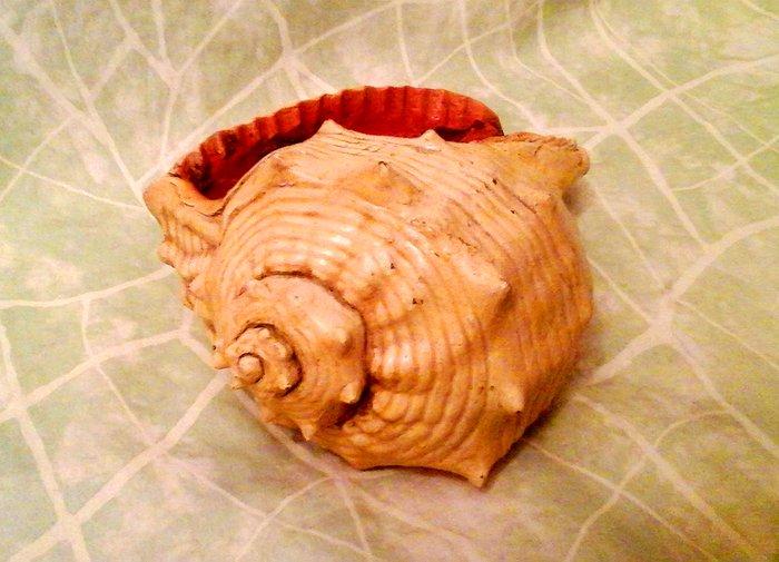Ракушка из глины.Декор для аквариума и не только! . Photo 0