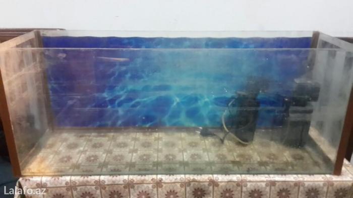 Bakı şəhərində Akvarium 85sm eni 26sm. Icindeki aksesuarlar var. Hava temizliyen ve d