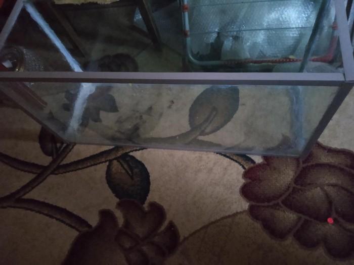 Akvarium yekedir biraz balaca biraxan yeri var . Photo 0