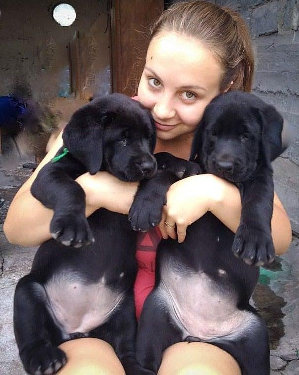 Срочно!Продаем щенков Лабрадора в Бишкек