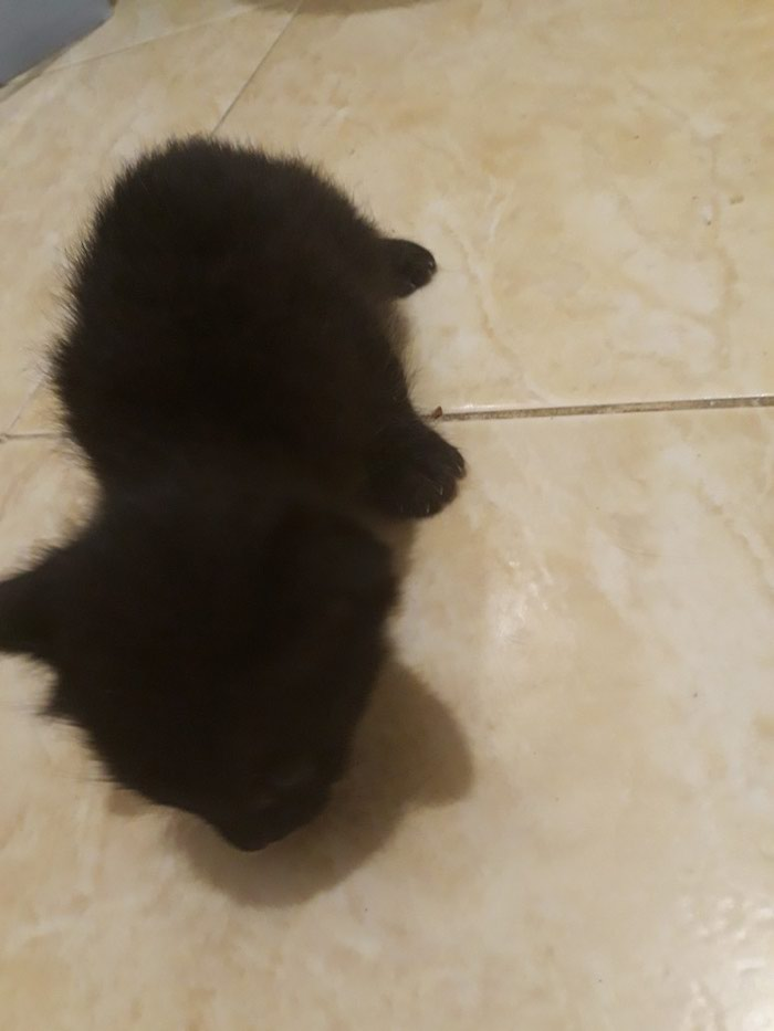 Коты. Photo 2