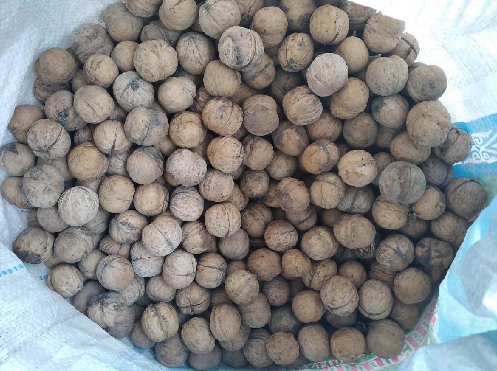 Грецкие орехи 100сом