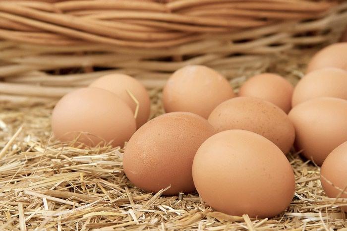 Инкубационое Яйцо, Брамаполукровки