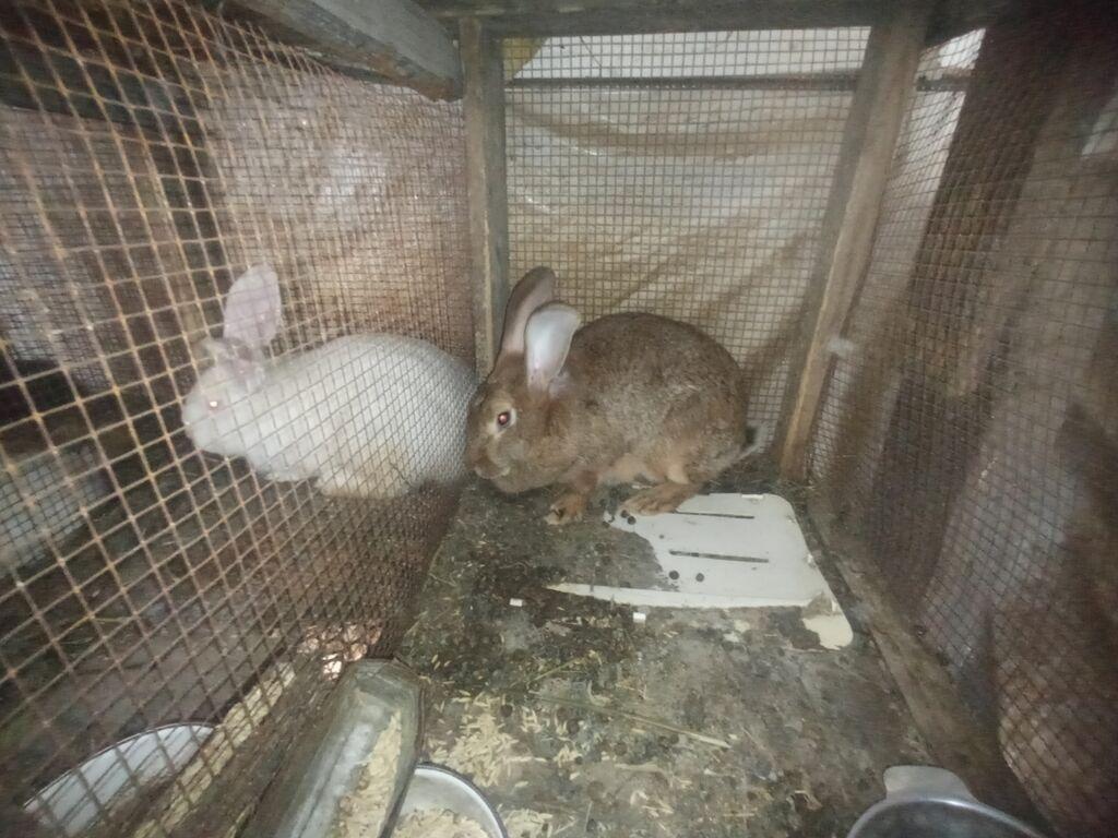 Продаю крольчат микс: Продаю крольчат микс