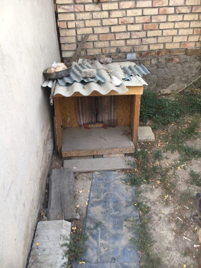 Дом для собаки, утепленная пеноплексом, состояние б/у в Бишкек