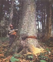 Бак кыябыз.Пилю деревья.Услуги бензопилы.. Photo 0