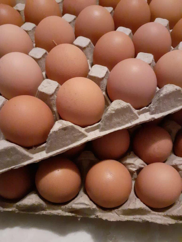 Продаю инкубационное яйцо порода Х айн лайн