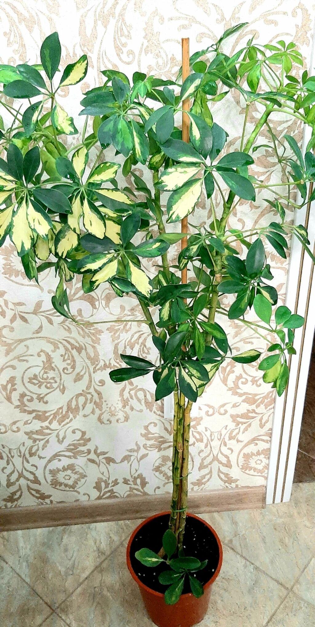 Красивые интерьерные растения для дома, квартиры, особняка, офиса