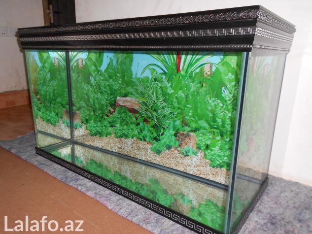 Akvarium sifariwleri qebul olunur versage  . Photo 0