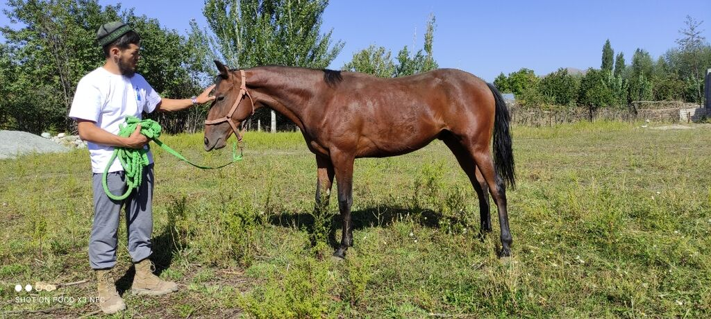Продаю | Жеребенок | Английская | Конный спорт | Племенные | Объявление создано 15 Сентябрь 2021 12:11:22: Продаю | Жеребенок | Английская | Конный спорт | Племенные