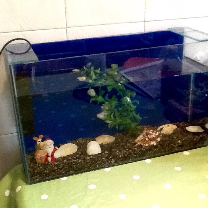 Аквариум со всем содержимым и рыбой. Photo 2