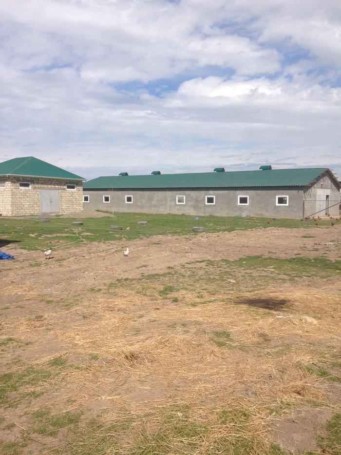 Obyekt - ferma- istilikxana imisli-bilasuvar avtomobil yolunun in Biləsuvar