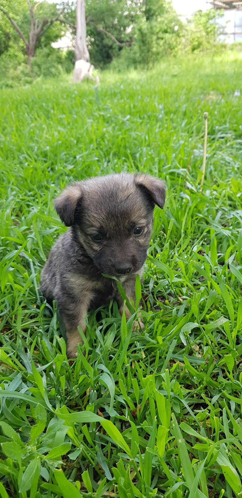 Отдам бесплатно щенка-девочку в добрые руки. Возраст 1,5 месяца: Отдам бесплатно  щенка-девочку в добрые руки. Возраст 1,5 месяца,