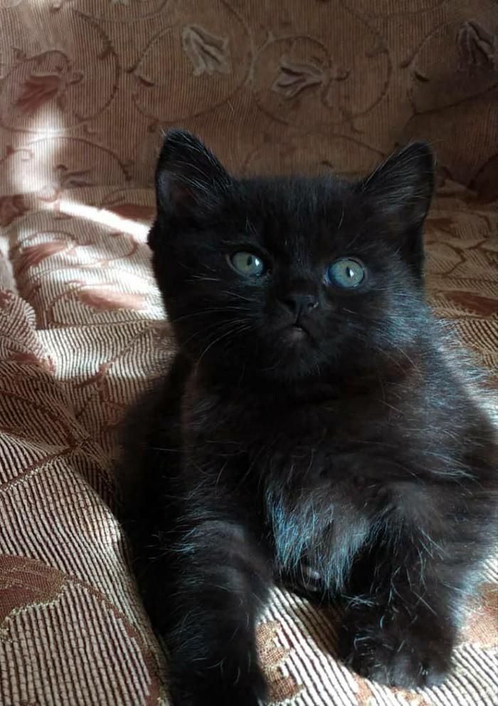 Отдам котят в добрые руки, кто хочет себе маленьких пантер?. Photo 1