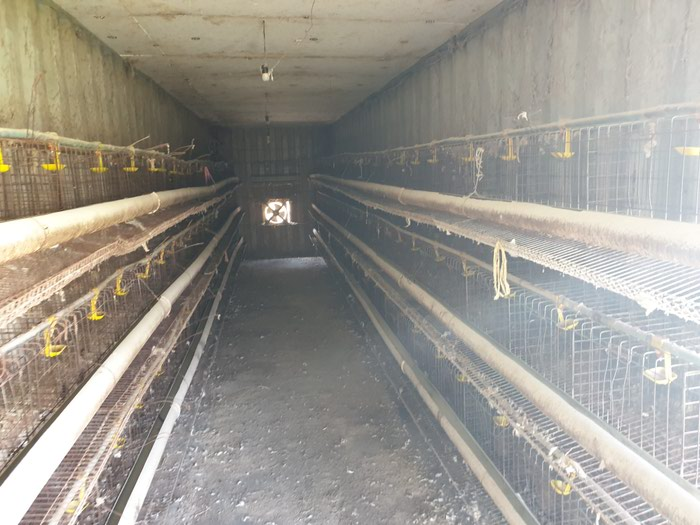 Продаю мини ферму в Караколе, на 500кур несушек