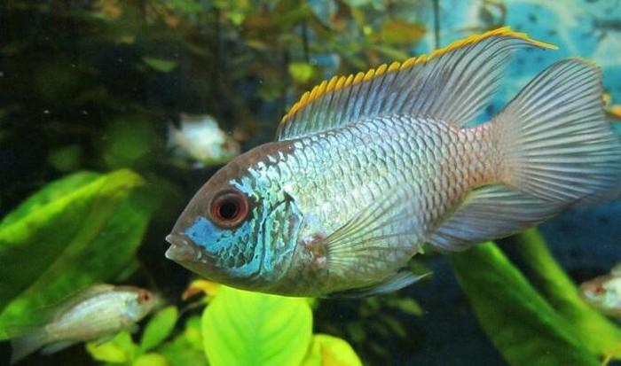 Аквариумние рибки цени договорние. Photo 4