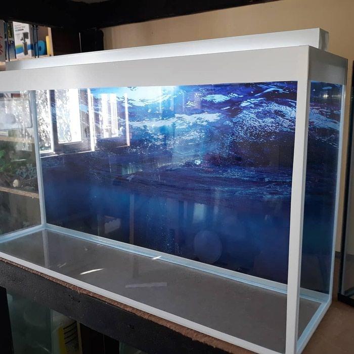 1metrelik akvarium  bawqalarida var  baliqlar var  avadanliqlar var. Photo 0