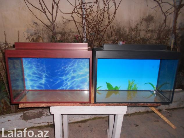 Teze duzelip akvariumlar mebel rengde ve qara rengde movcuddu . Photo 3
