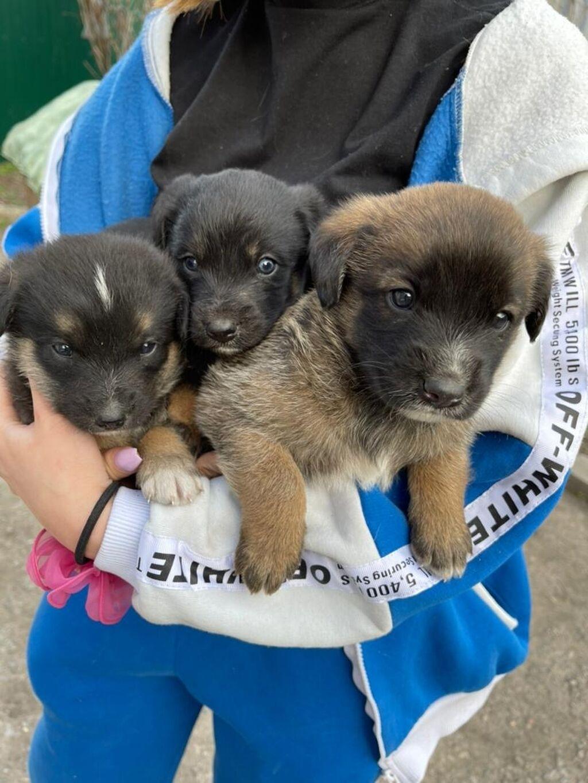 Отдам в хорошие руки милых щенков: Отдам в хорошие руки милых щенков