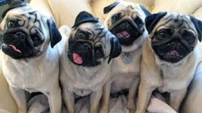Για σκύλους σε Κεντρικά Τζουμέρκα