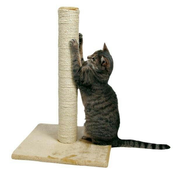Когтеточка  Любому представителю кошачих нужно стачивать когти. Они мо в Бишкек