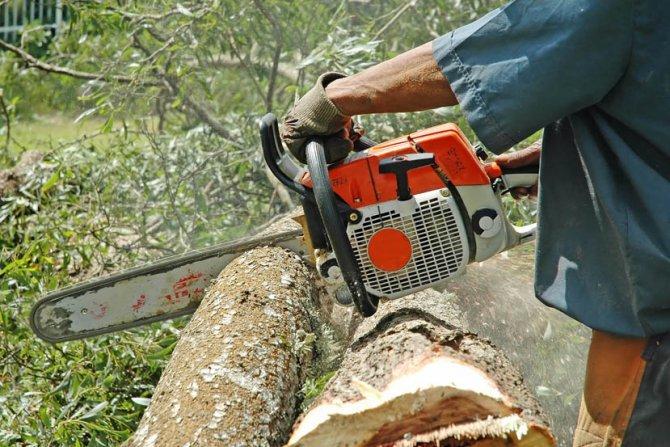 Potrebno 3 grupe od 5 muškaraca za rad na seči šume u nemačkoj, - Novi Sad