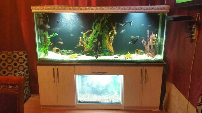 700 litir altinda da 1 akvarium tecili. Photo 2