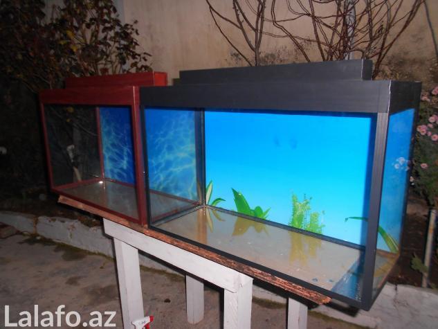 Teze duzelip akvariumlar mebel rengde ve qara rengde movcuddu . Photo 0