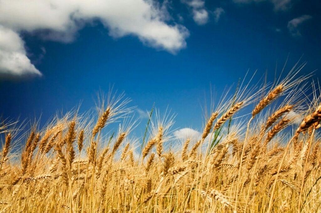 Сдам в аренду соток Для сельского хозяйства от собственника: Сдам в аренду соток Для сельского хозяйства от собственника