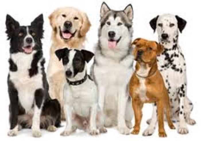 Για σκύλους σε Αθήνα