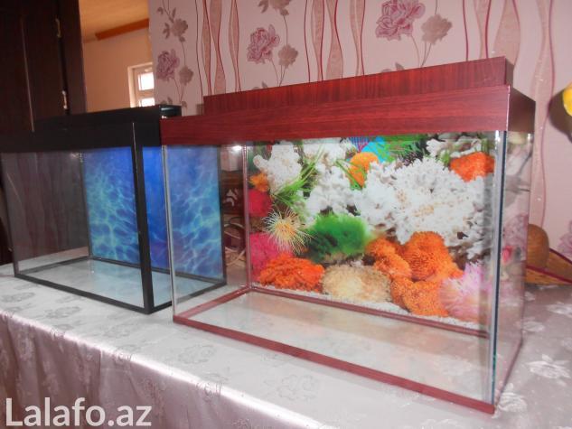 Teze akvarium 60 litre . Photo 4