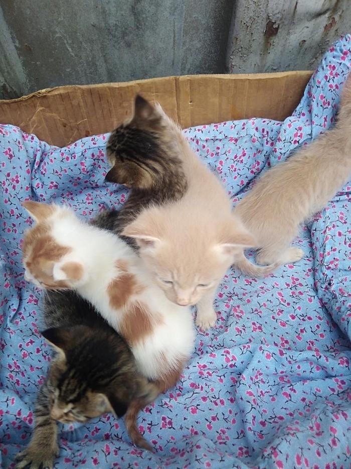 Подарю котят всех или по одному,кому как угодно.. Photo 3