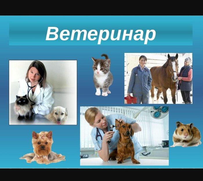 Нужны Ветеринары!!!Обязанности:Работа ветеринарного врача,вакцинации в Бишкек