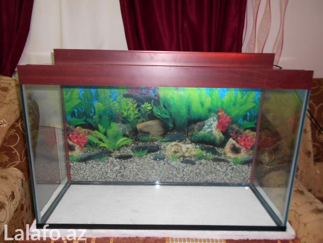 Teze akvarium 120 litrelik  whatsapp var su qiymetine qalin wuweden  . Photo 1