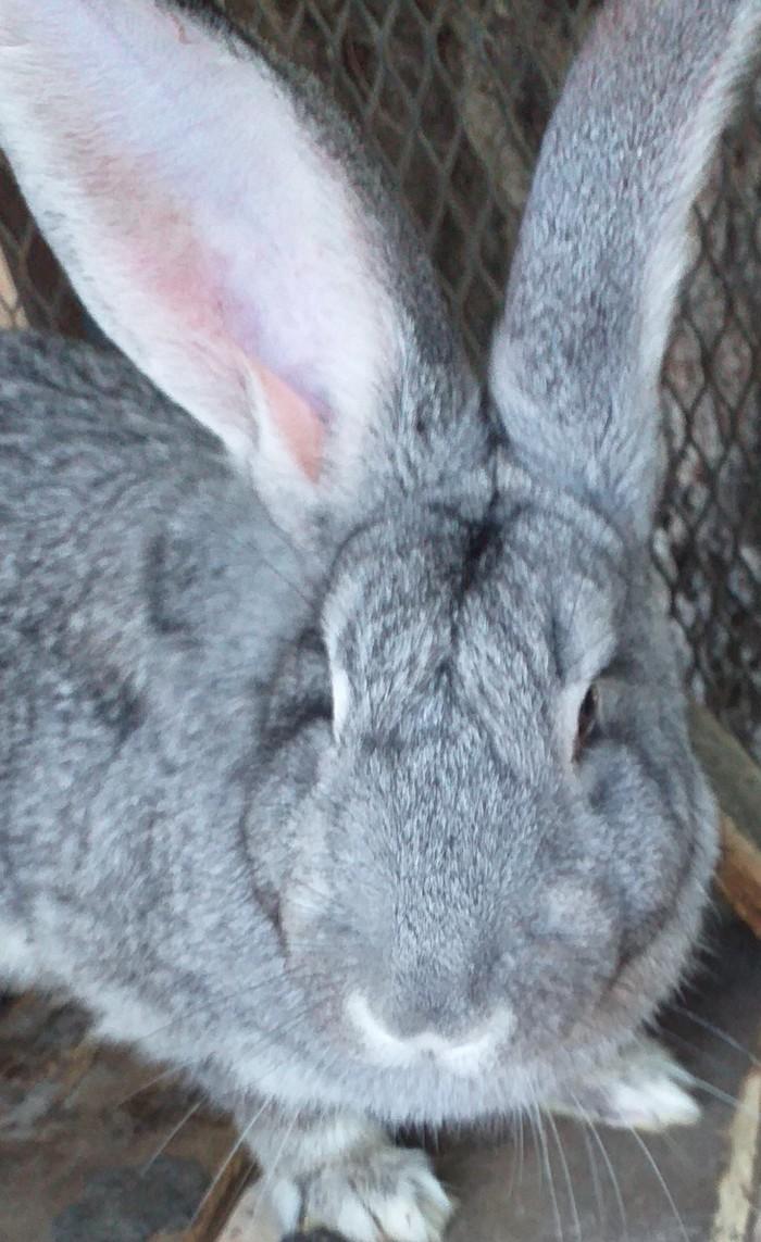 Кролики,кролчата. Photo 0