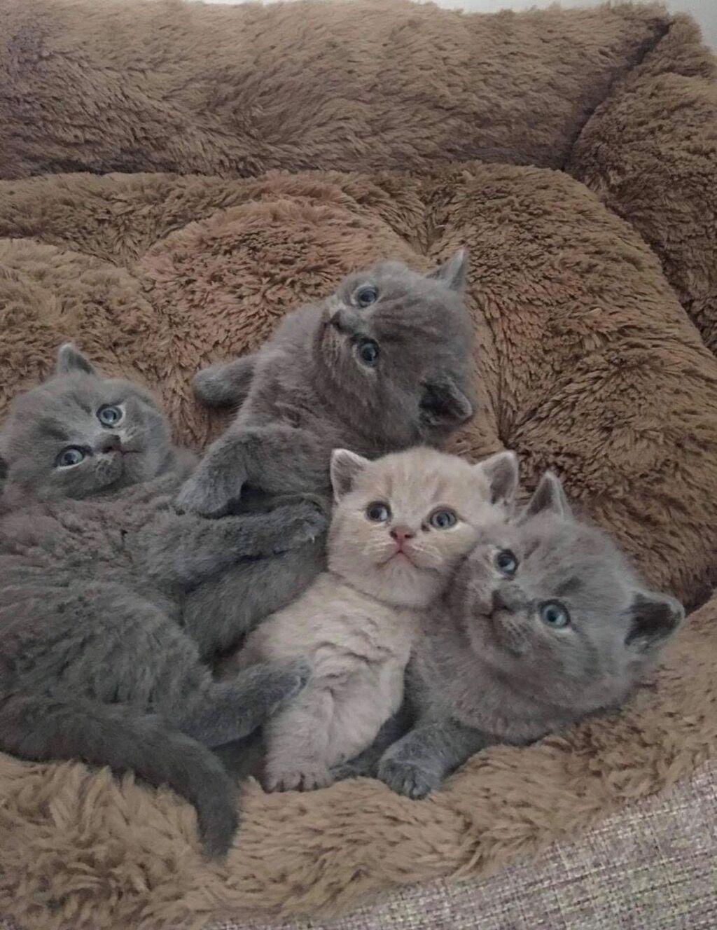 Για γάτες - Ιθάκη: