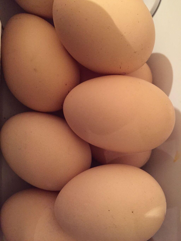 Продаются брамовские яйцо для инкубации: Продаются брамовские яйцо для инкубации