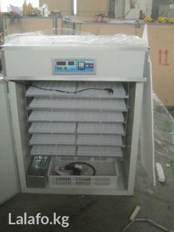 Продаем инкубаторы для всех видов яиц  в Бишкек