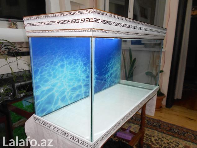 Akvarium sifariwleri qebul olunur versage  . Photo 4