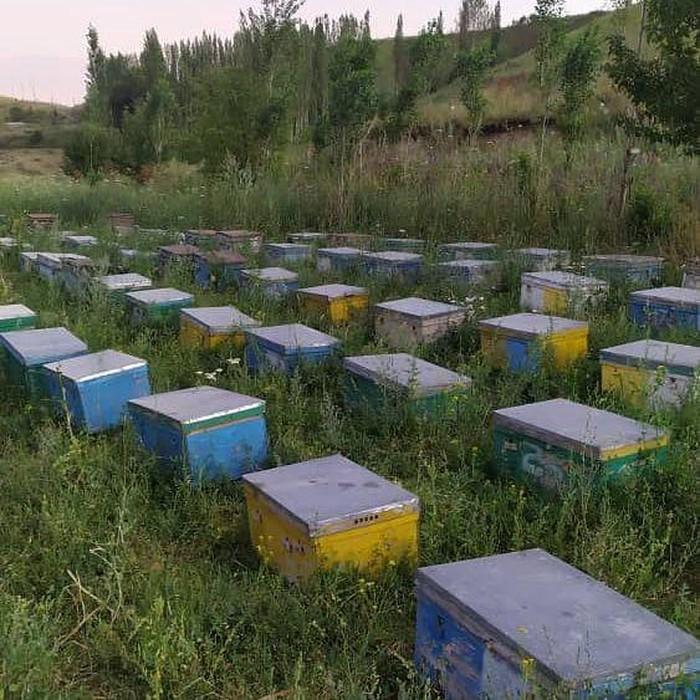 Менен бишкек балдар таанышам Кыргыз жигиттери