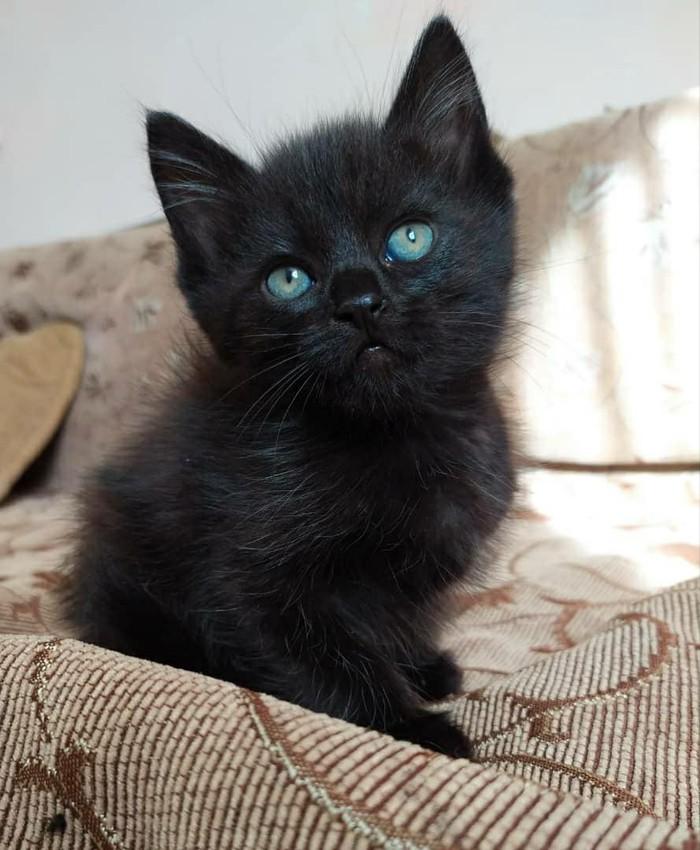 Отдам котят в добрые руки, кто хочет себе маленьких пантер?. Photo 2