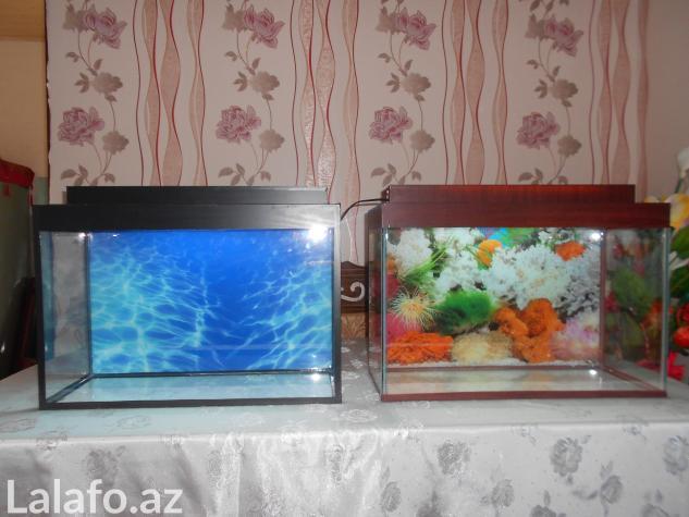Teze akvarium 60 litre . Photo 0