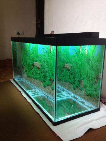 325 litrelik teze hazirlanip akvarium . Photo 0