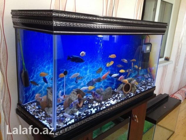 Akvarium sifariwleri qebul olunur versage  . Photo 2