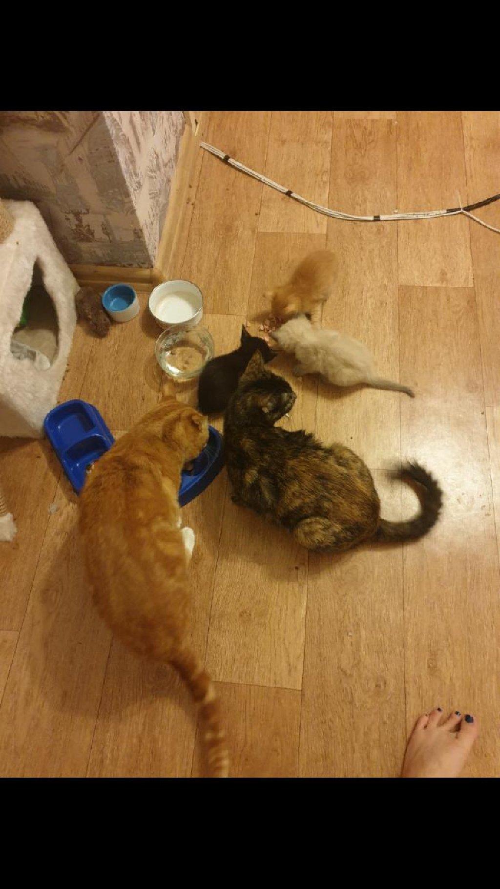 Кошка и кот. Ходят в латок.Едят корм,сосиски и.тд. Отдадим даром