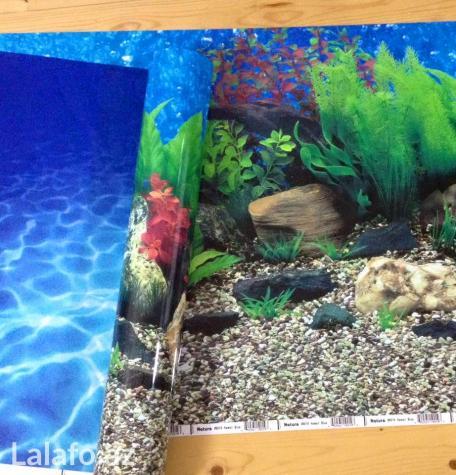 Akvarium ucun arxa fon lar . Photo 5