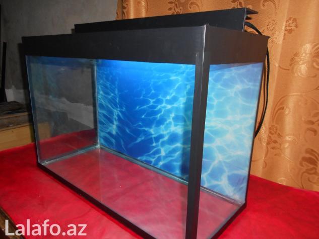 Teze akvarium 60 litre . Photo 2